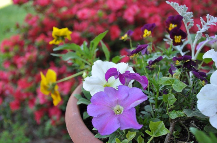 2014spring-flowers_004