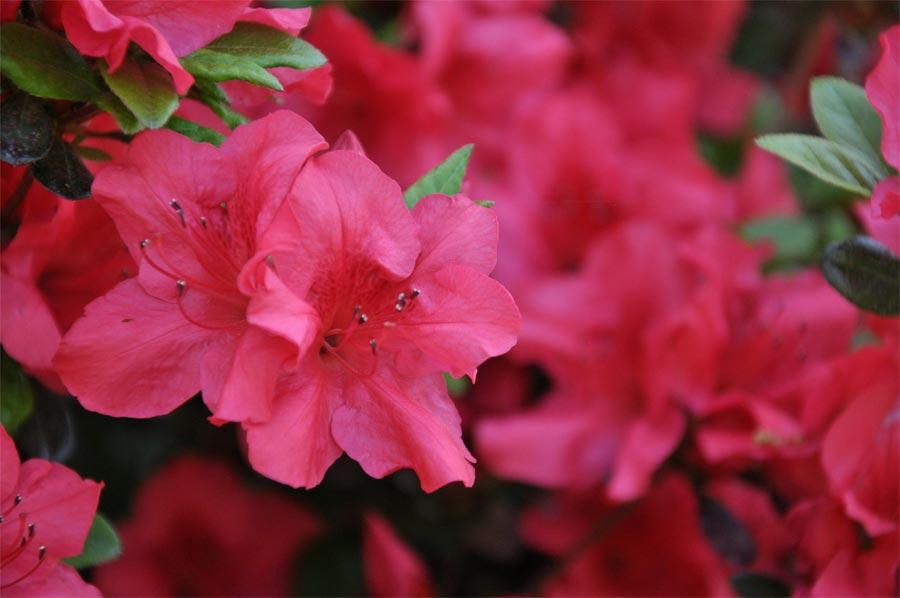 2014spring-flowers_007