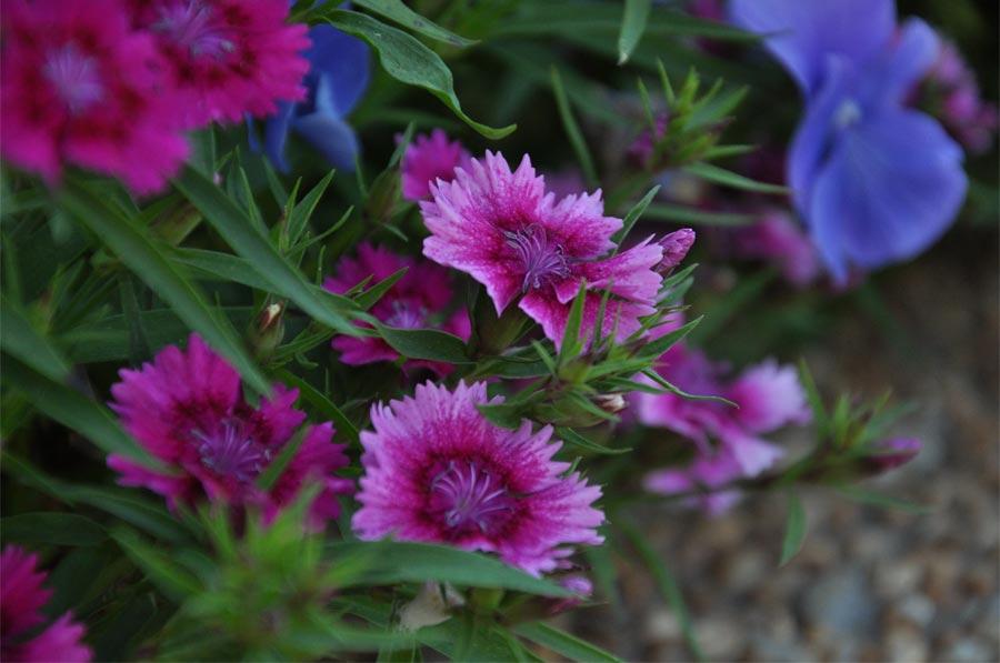 2014spring-flowers_008