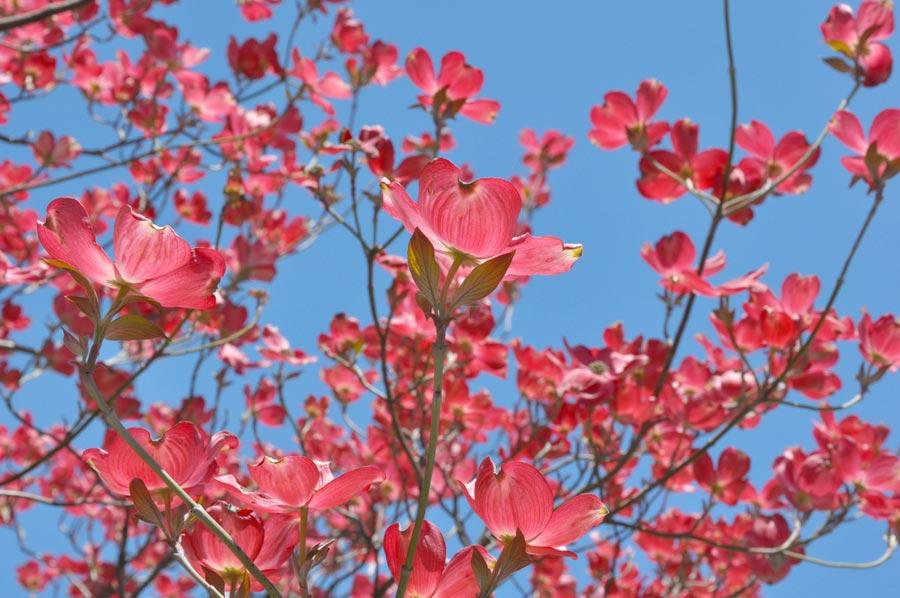avalon-flowers_001