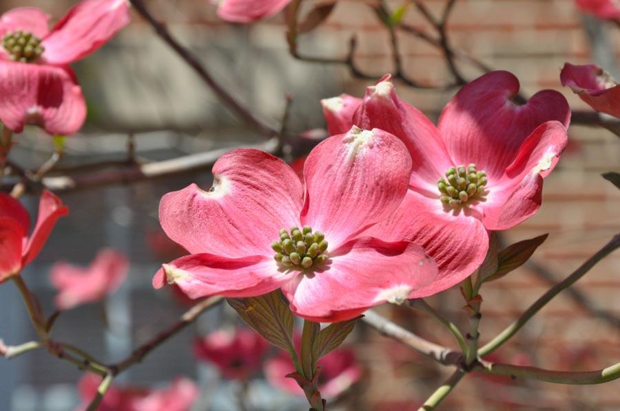 avalon-flowers_003